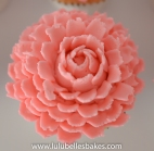 Buttercream Pink Chrysanthemum