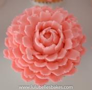 Buttercream Pink Chrysanthemum